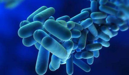 Legionella: il batterio, i lavoratori a rischio e la prevenzione